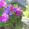 Orchid Farm - Alley