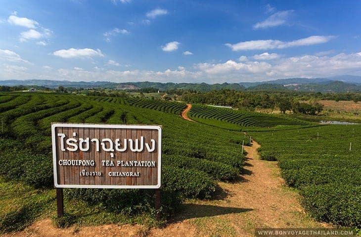 Panneau de la plantation de thé Choui Fong