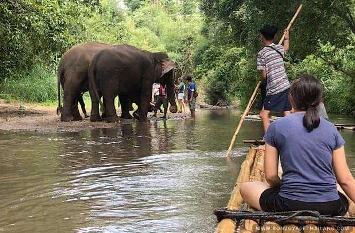 Elephant near Bamboo Rafting Mae Wang River