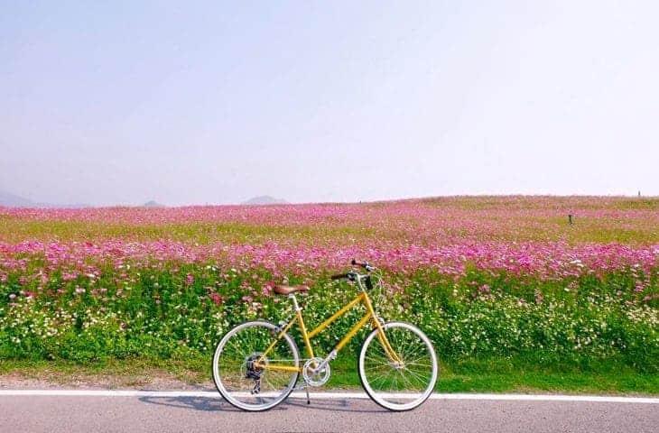 Singha Park Bike