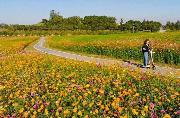 Singha Park Flowers