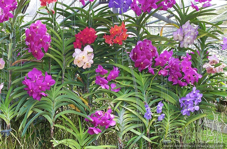 Orchid and Butterfly Farms