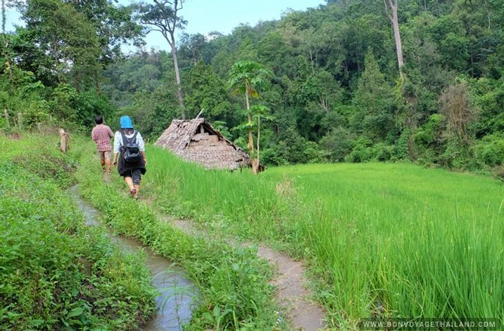 Nature - Trekking in Chiang Mai