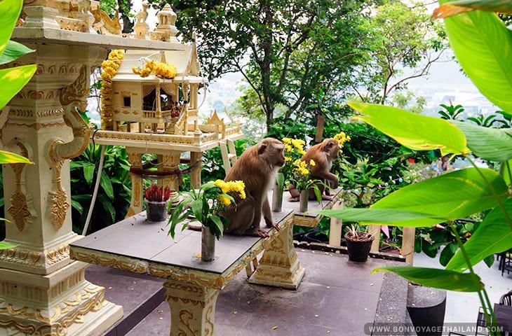 Monkey Hill Phuket Thailand